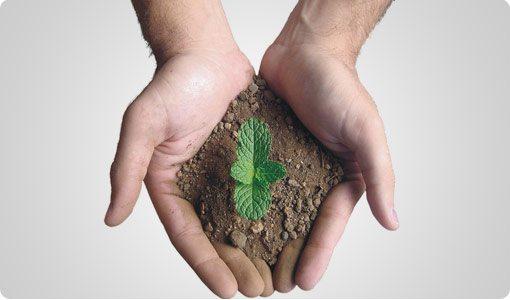 Globalização e meio ambiente